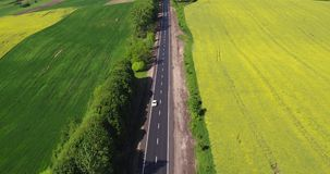 Flying Over the Road Trafic in a Field. Aerial view Car Driving on Country Road about Field Canola stock video