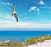 Flying over Sardinia Stock Photography