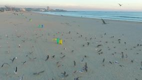 Flying over seagulls on the Atlantic coast in Porto stock video
