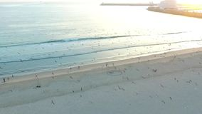 Flying over seagulls on the Atlantic coast in Porto. Aerial. stock footage