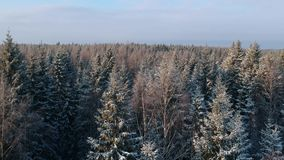 Flying over snowy winter forest stock video footage