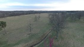 Flying over spring forest with pink oak tree stock video footage
