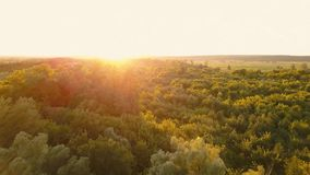 Flying over the trees at dawn - aerial videotaping