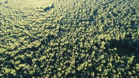 Flying over the trees in summer at sunset. Movement over a large green forest. Aerial video from a drone from a altitude. 4K UltraHD stock video footage