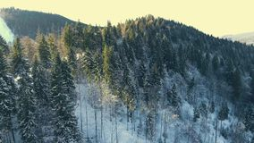 Flying over a winter forest in the mountains stock footage