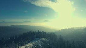 Flying over a winter forest in the mountains stock video footage