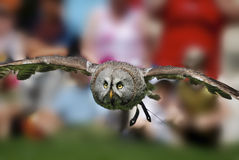 Flying owl Stock Photo