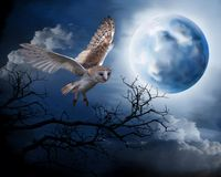 Flying owl on the background of the night sky royalty free illustration