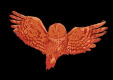 Flying owl with open wings isolated on black background. Vector illustration drawn with rough brush in warm colors royalty free illustration