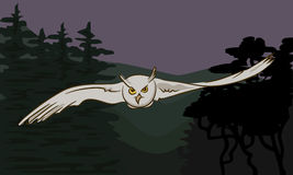 Flying owl with outstretched wings Royalty Free Stock Images