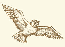 Flying owl. Vector drawing Royalty Free Stock Photo