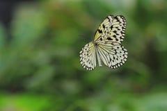 Flying Paper Kite Stock Images