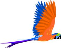 Flying parrot Stock Photos