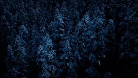 Flying Past Snowy Trees In Moonlight stock video