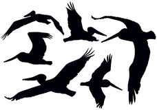 Flying Pelican Silhouettes Royalty Free Stock Photo