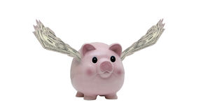Flying Pig royalty free stock photo