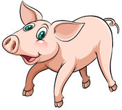 A flying pig Royalty Free Stock Images