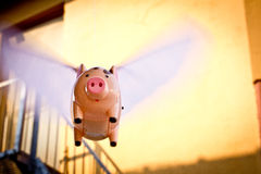 Flying Pig. With motion blur and yellow wall in background. Wings are fluttering as pig flies Stock Image