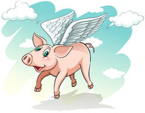 A flying pig. On a white background Stock Photos