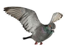 Flying pigeon isolated Royalty Free Stock Images