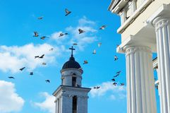 Flying pigeons. Many flying pigeons on city sky background Royalty Free Stock Photos