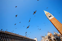 Flying pigeons Royalty Free Stock Images