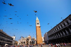 Flying pigeons Stock Image