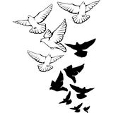 Flying pigeons background. Hand drawn vector Royalty Free Stock Photography