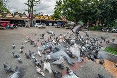 Flying pigeons in Chiangmai Thailand Royalty Free Stock Photo