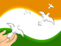 Flying pigeons on Indian flag colors background. Stock Image