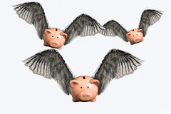Flying Pigs. Three flying pigs - Ideas - Concepts Royalty Free Stock Images