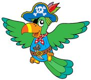 Flying pirate parrot Stock Image