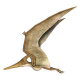 Flying Pteranodon. 3D digital render of a prehistoric flying reptile Pteranodon isolated on white background Stock Image