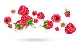 Flying raspberries on white. Vector realistic illustration Stock Photography