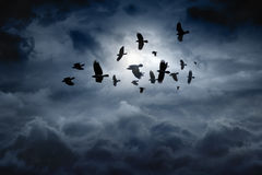 Flying ravens Royalty Free Stock Photos