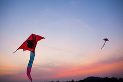 Flying Red Kites. Red kites flying in the sky during sunset royalty free stock photos