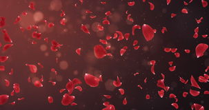 Flying Romantic Dark Red Rose Flower Petals Falling Background Loop 4k stock video