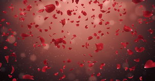 Flying Romantic Dark Red Rose Flower Petals Falling Background Loop 4k stock footage
