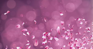 Flying Romantic Red Pink Rose Sakura Flower Petals Falling Placeholder Loop 4k. Animation of romantic flying red pink rose sakura flower petals with place for stock video footage