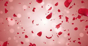 Flying Romantic Red Rose Flower Petals Falling Background Loop 4k stock video footage