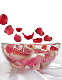 Flying rose petals to the pan. On the white background stock photo