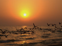Beautiful ocean sunset. Golden ocean sunset with flying birds Royalty Free Stock Photo
