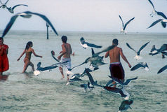Flying sea gulls and bathers