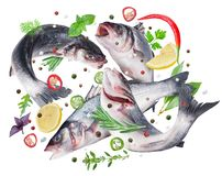Flying seabass fishes and different spices. Clipping path. stock images