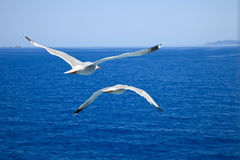 Flying seagull. S over blue water background Stock Photo