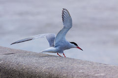 Flying on Seagull Royalty Free Stock Images
