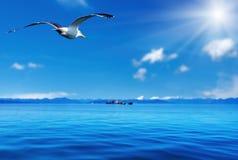 Flying seagull. Blue sky, ocean and sun Stock Photos