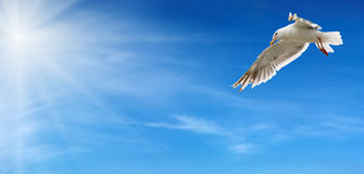 Flying seagull. Blue sky and flying seagull Royalty Free Stock Photography