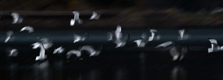Flying Seagull Abstract Royalty Free Stock Photos