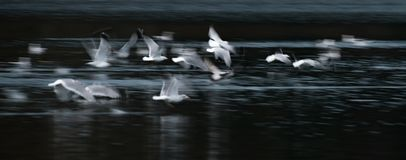 Flying Seagull Abstract Stock Image